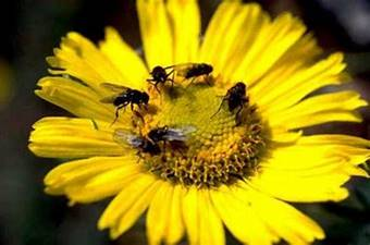 Image result for Bees and Flowers